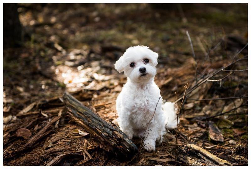 Calgary Pet Photographer