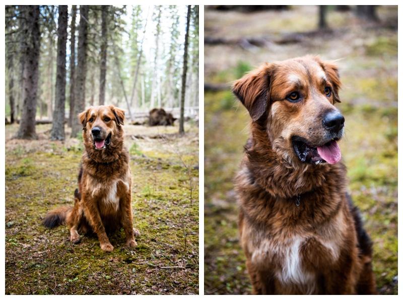 Dog Friendly Engagement Photographer Calgary