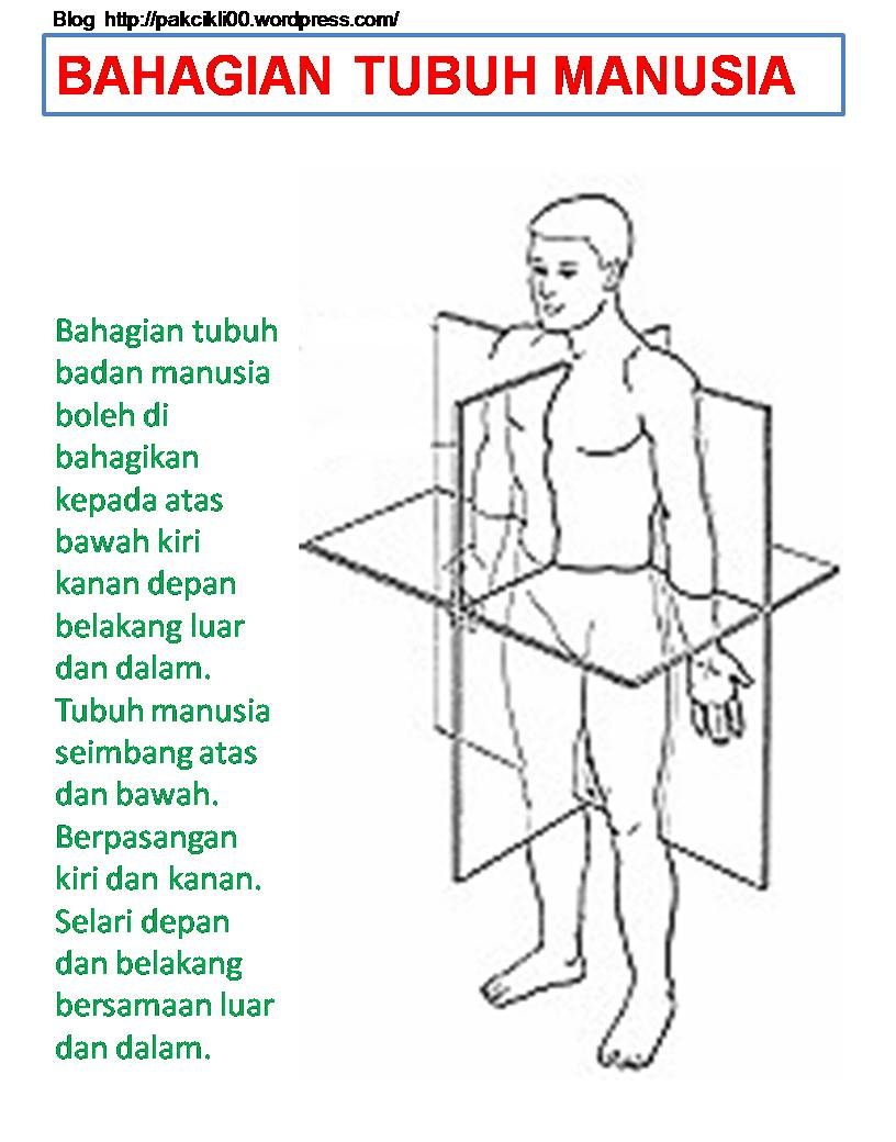 bahagian tubuh manusia