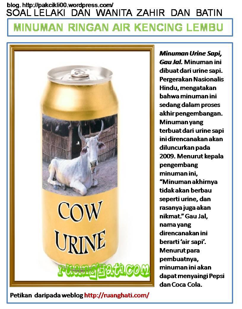 minuman ringan air kencing lembu