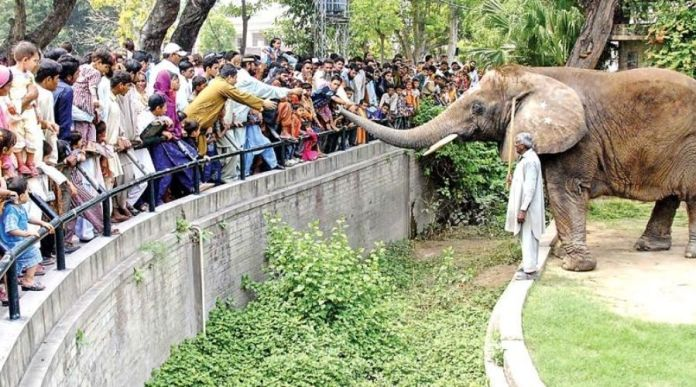 KMC announced to reopen Karachi Zoo & other recreational parks from Tuesday