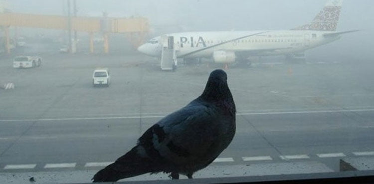 Pakistan CAA to Install Bird Repellent System at Airports