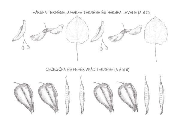 Mintázatok őszi termésekkel