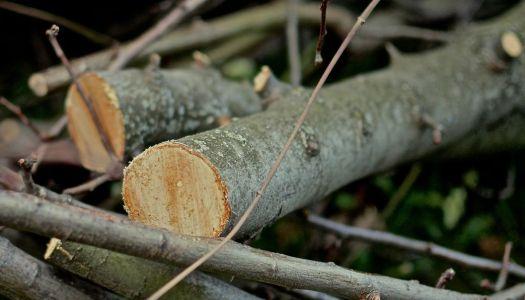 Unripe green walnut preserve and confiture