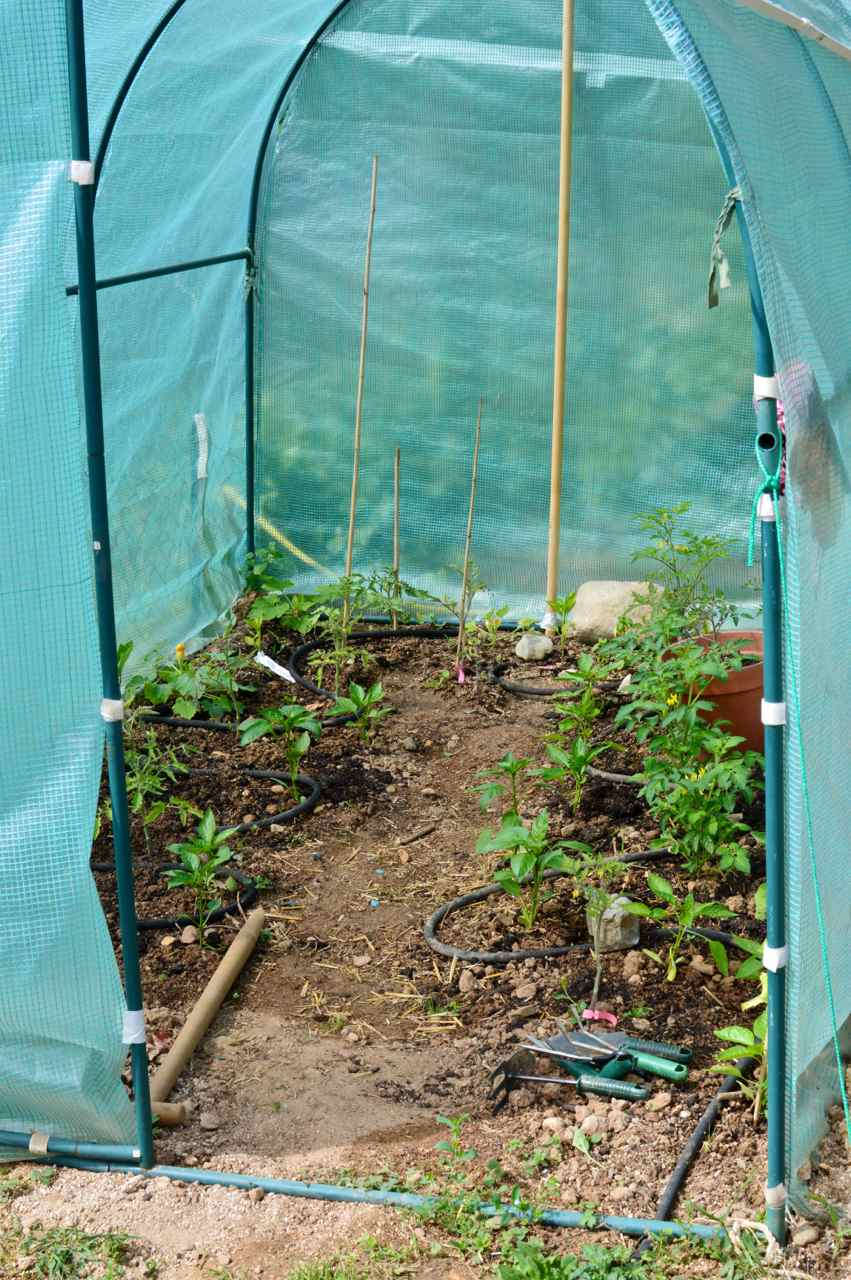 garden may unheated greenhouse