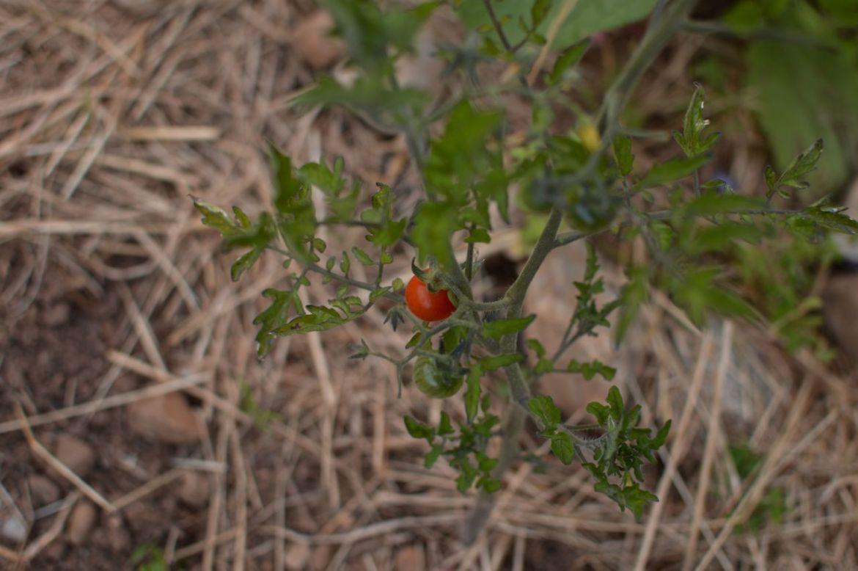 garden update june14