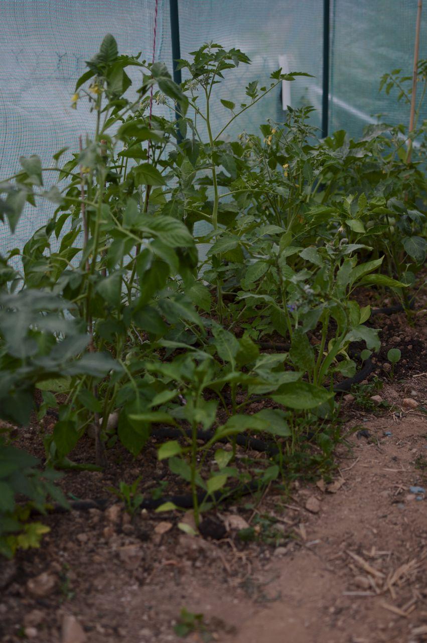 garden update june23