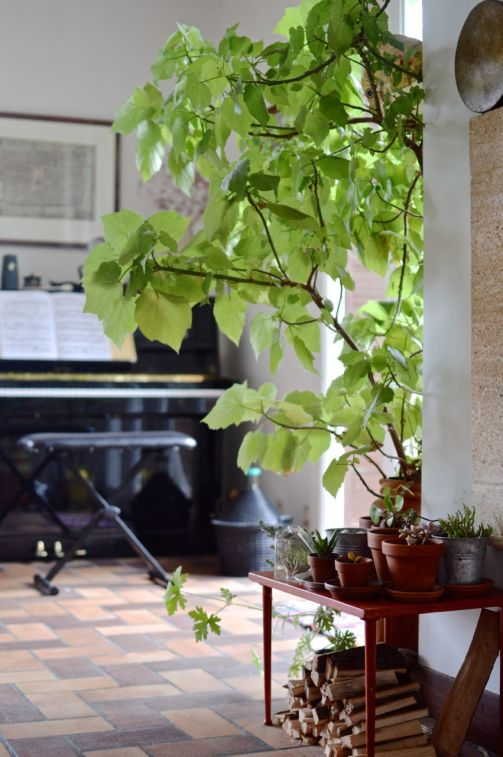 A baby succulent in the ever expanding indoor garden