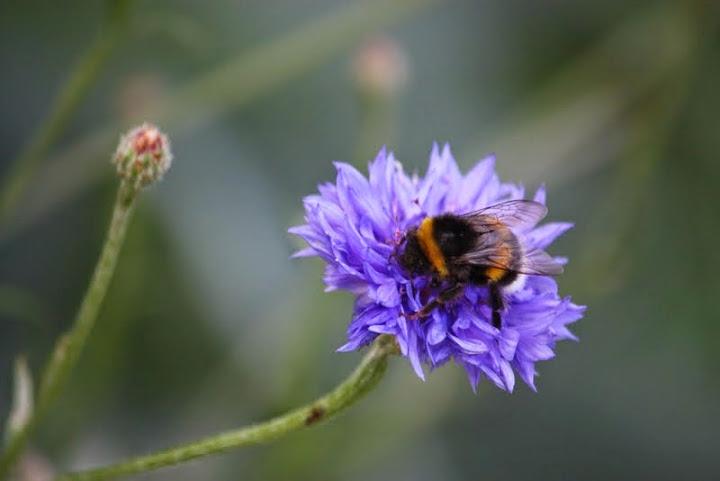 3flower