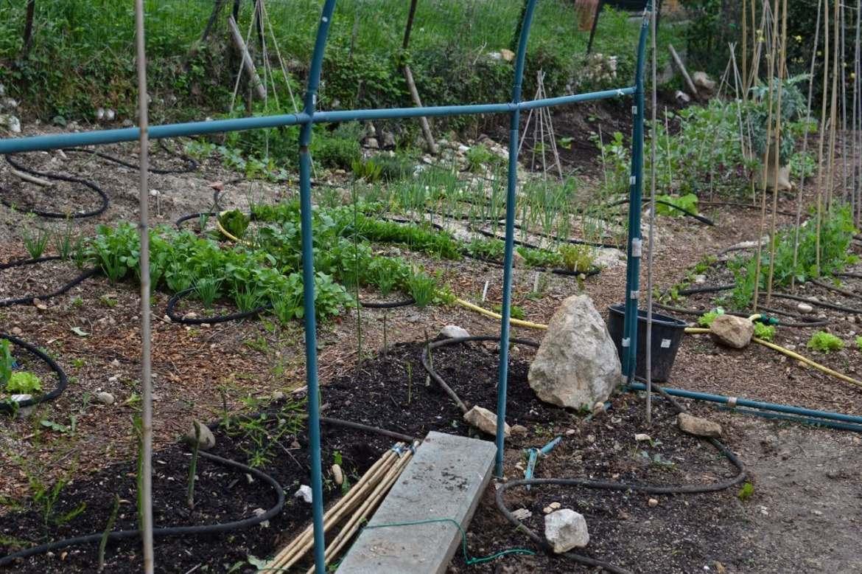 garden update may - 17
