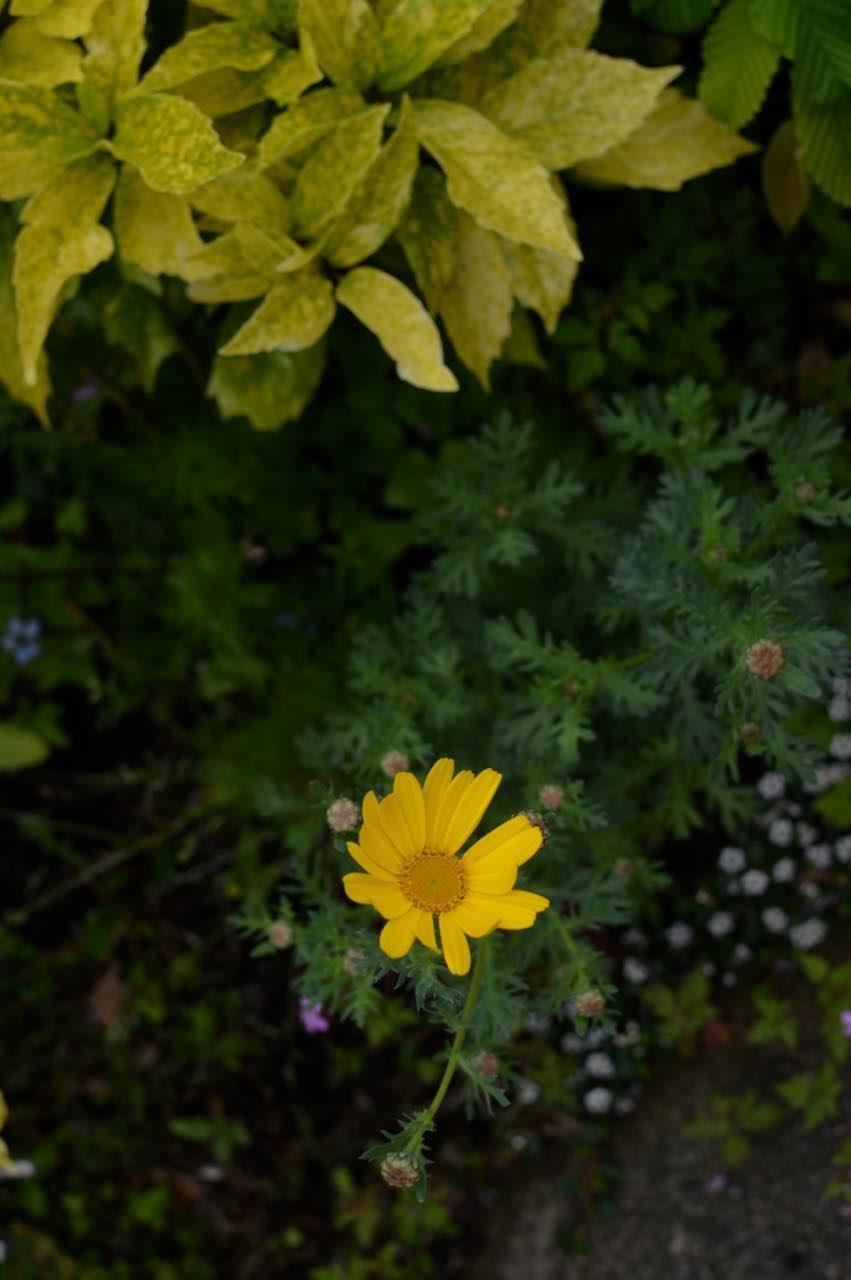 garden update may - 27