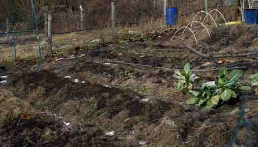 Vegetable garden update February 2017 (video)