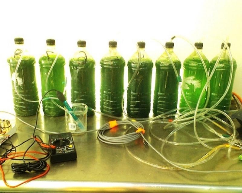 Homemade Biodiesel from Algae (Urdu)