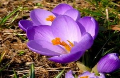 Homemade Perfume from plant's flower