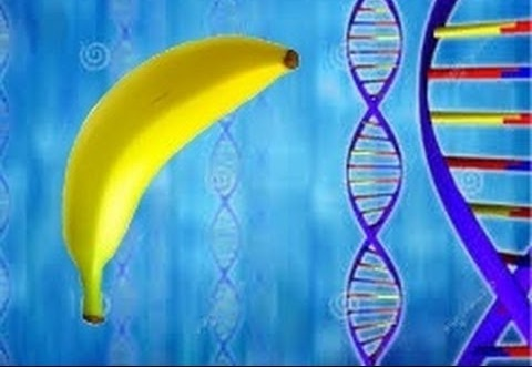 Biology Experiment - How to Extract DNA From a Banana