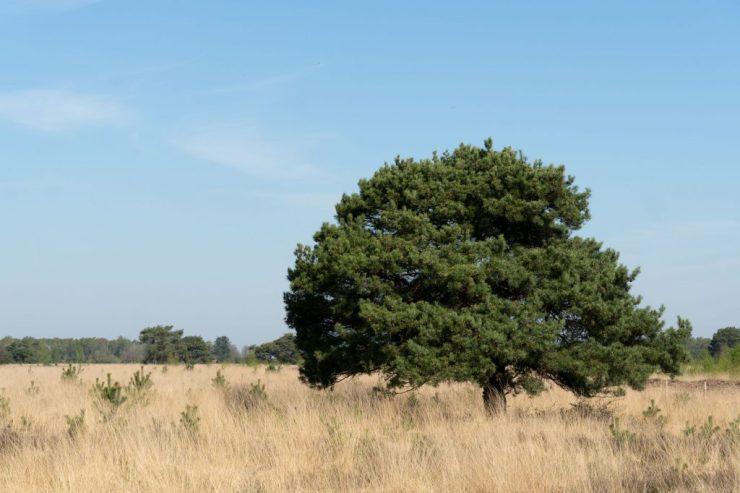 Hollannin kansallispuistoissa ei ole paljoakaan korkeita puita