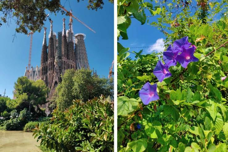 Sagrada Familian kirkko ja kukkia Barcelonassa