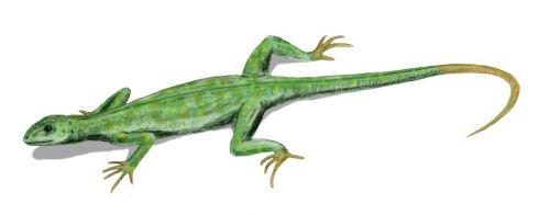 Labidosaurus