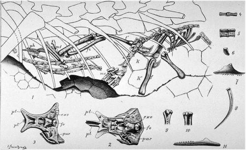 Compsognathus' last meal