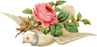 Valentine Dove