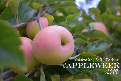 Welcome to  AppleWeek!