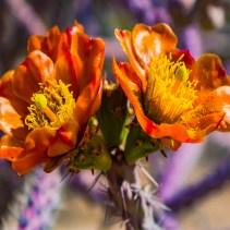 Experimental Sharpen Orange Flower