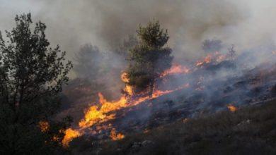 Photo of عشرات الحرائق اندلعت اليوم في مستوطنات شرق القطاع