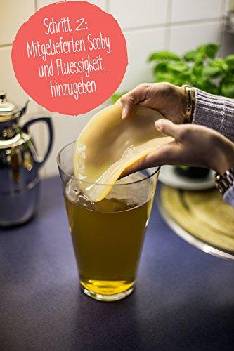 Original Kombucha Tee Pilz in Premium Größe Besonders Vitaler Scoby in Bio-Qualität für 1-5L Mit Kombucha Getränk Anleitung und Erfolgsgarantie von Fairment ® - 6