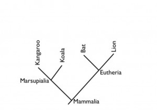 Diagraming Evolution Or How To Read A Cladogram Paleocave Blog