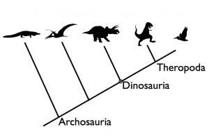 Relationships among archosaurs