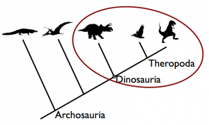 This makes it more obvious that birds are squarely in Dinosauria.
