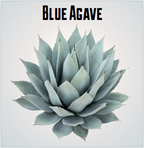 Is Agave Paleo?
