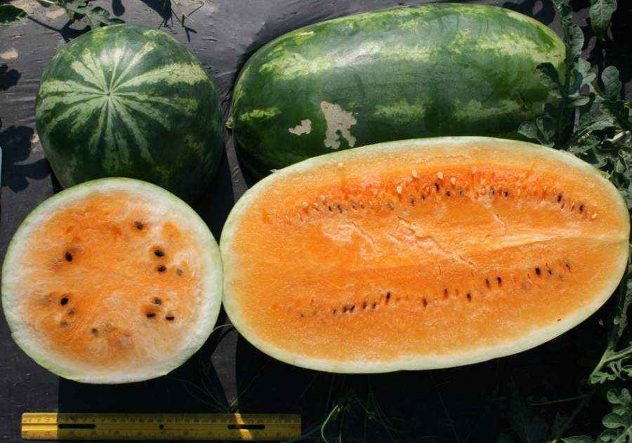 orange watermelon 5 things you didn't know about watermelons