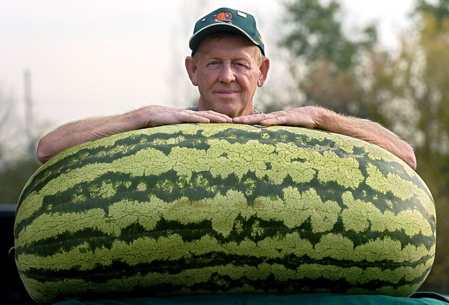 world's largest watermelon 5 things you didn't know about watermelons
