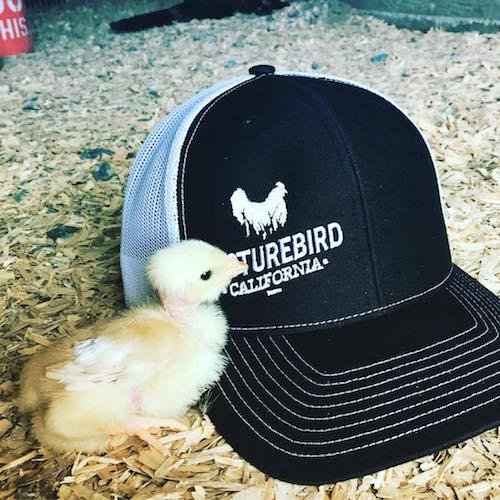 Chicks + Hats - Pasturebird - Paleo Approved - Paleo Foundation