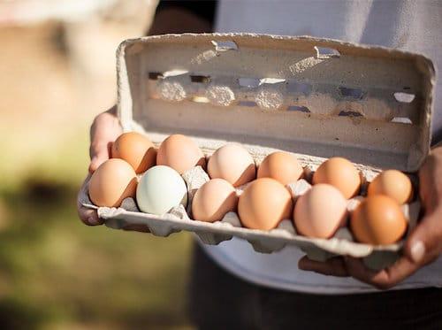 Primal Pastures Eggs - Pasturedbird - Paleo Approved - Paleo Foundation