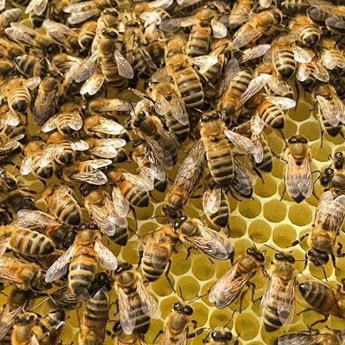 Bees - Ballot-Flurin - Certified Paleo - Paleo Foundation