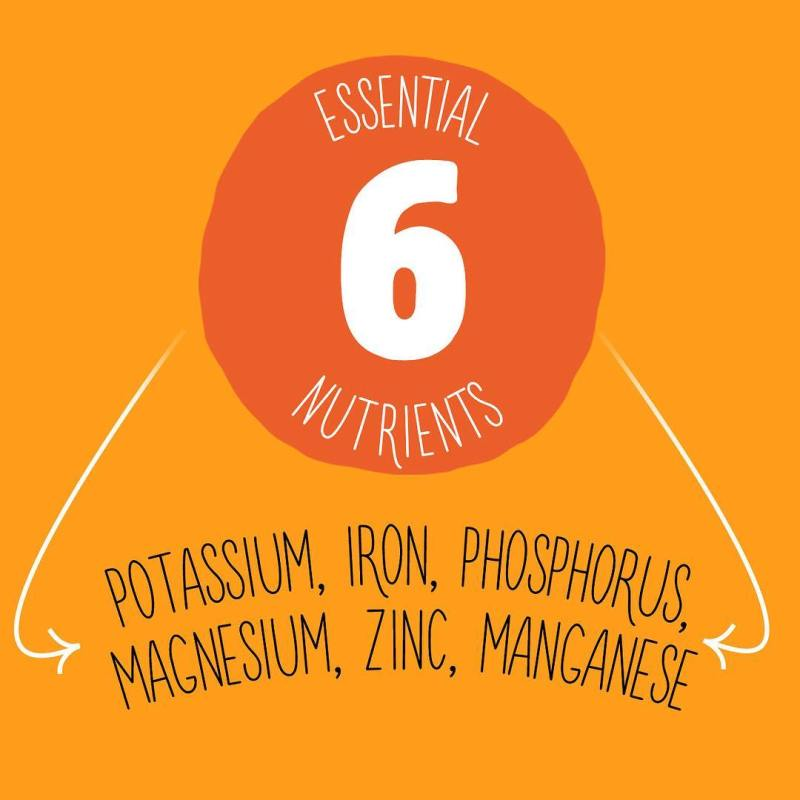 Essential 6 nutrients - Skuta Pumpkin Co. - Certified Paleo
