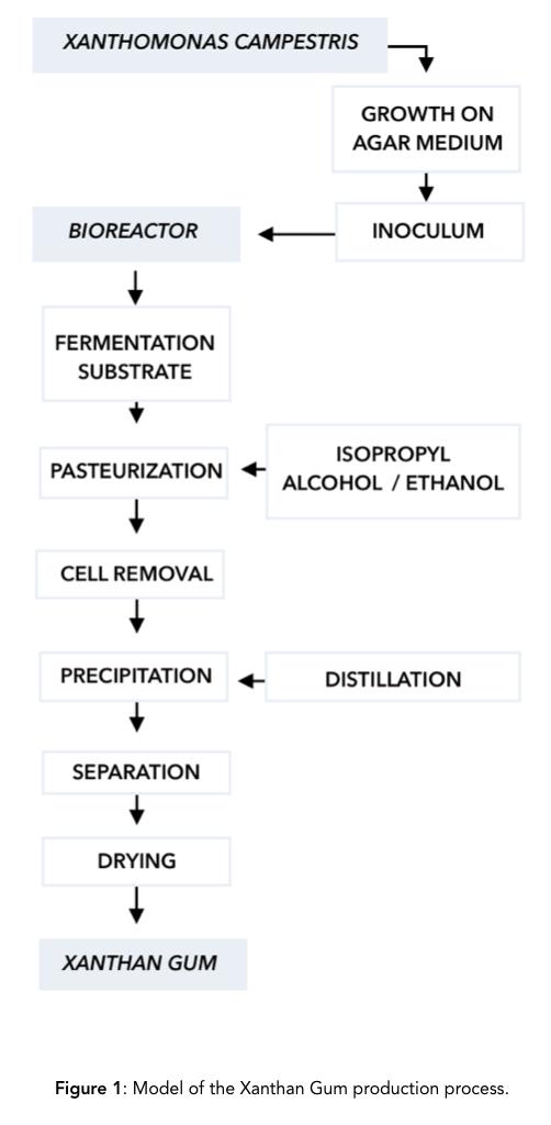 Xanthan Gum Production Process