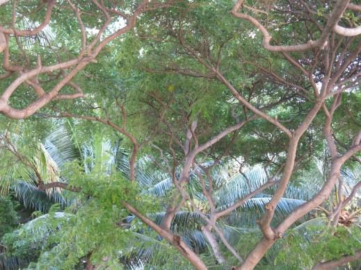 Cool tree shot.