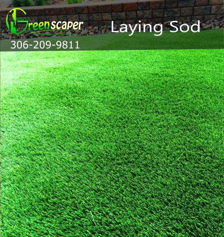 laying_sod_project_by_greenscaper_Regina08152018