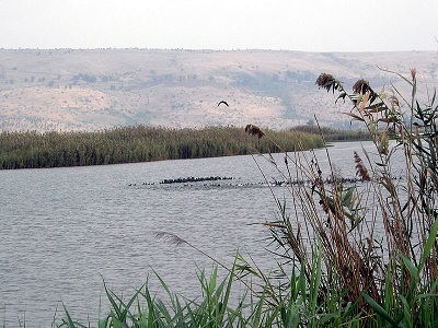 Lake Huleh. (Photo: Wikimedia Commons)
