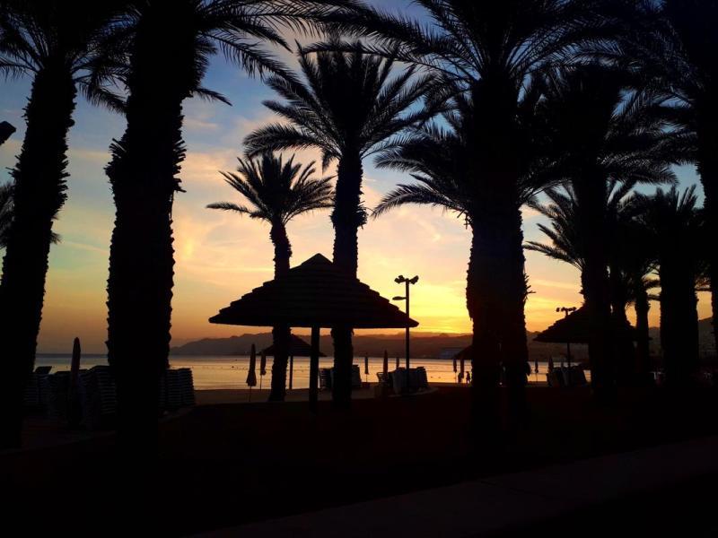 eilat israel sunset palm trees