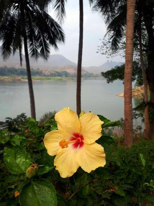 tropical flower mekong luang prabang trip report