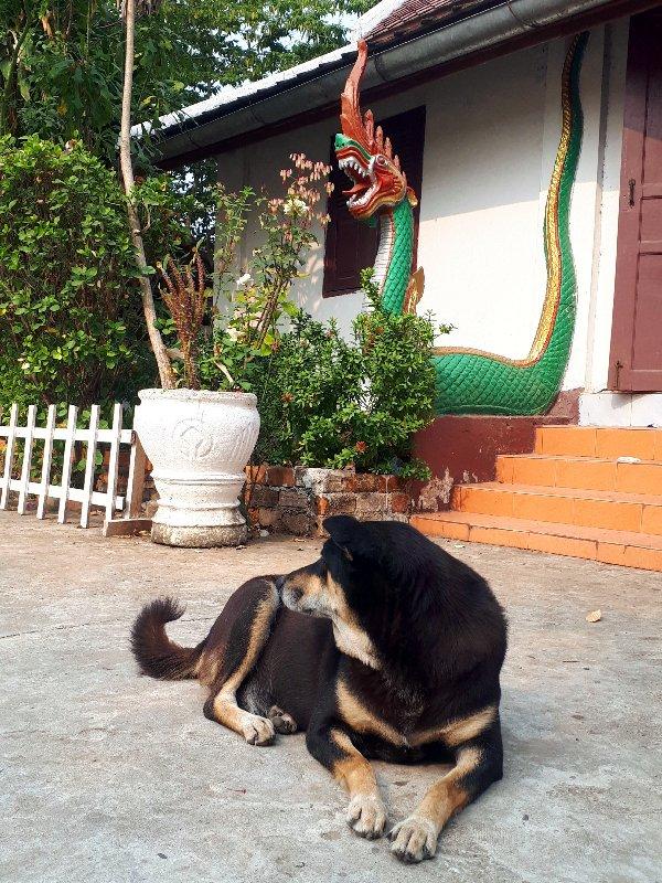 vat phonxay dog