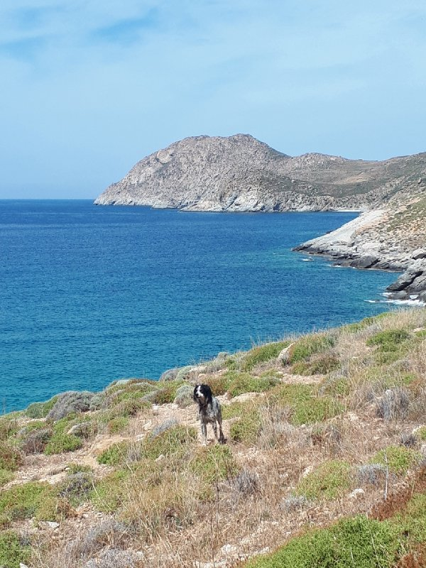 kalo ampeli beach dog