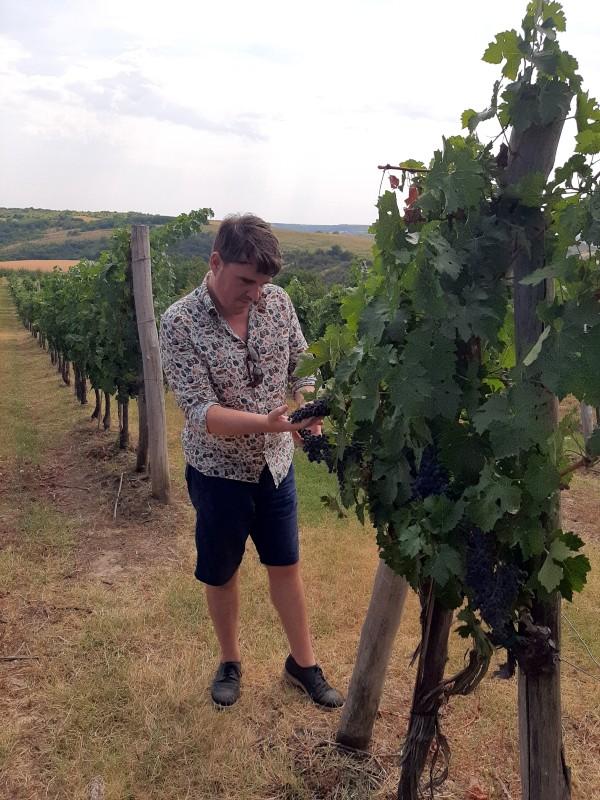 koen wine bulgaria