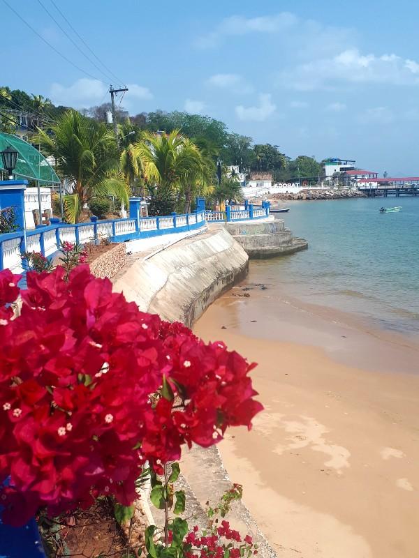 taboga flowers isla island day trip