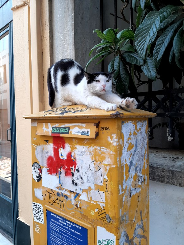 street cat greece