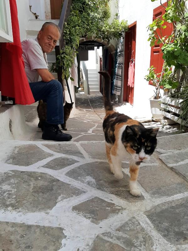 old man cat naxos
